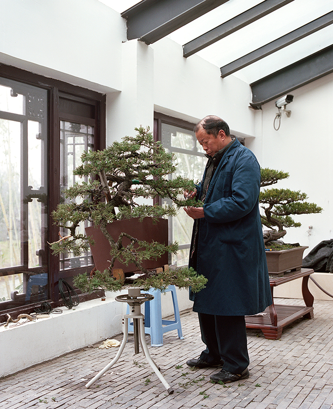 The-Bonsai-Project-by-KnibbelerWetzer-1