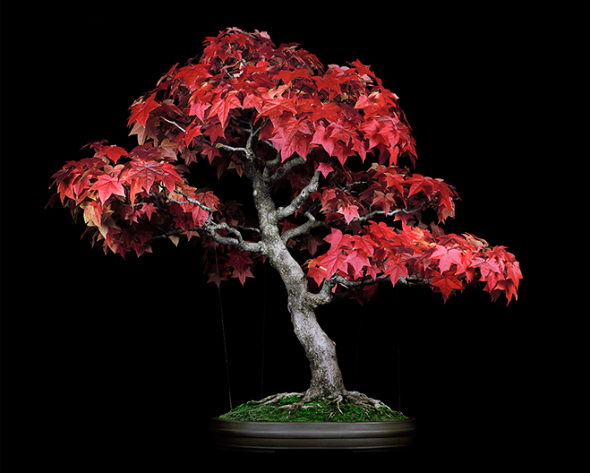 The-Bonsai-Project-by-KnibbelerWetzer-4