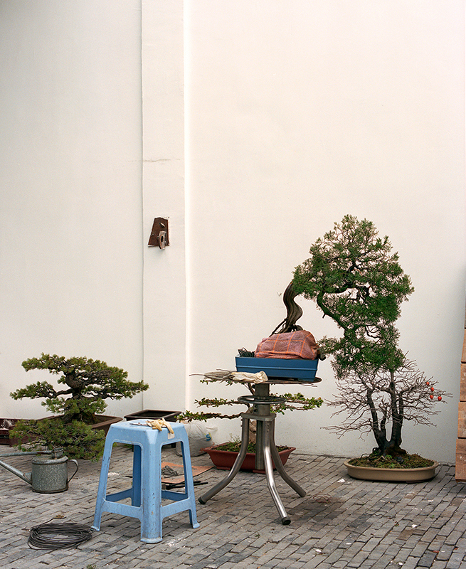 The-Bonsai-Project-by-KnibbelerWetzer-2