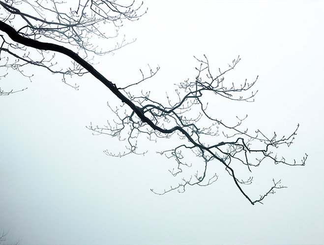 Articulating-the-Unseen-World---Nature-by-South-Korean-Photographer-Boomoon-12